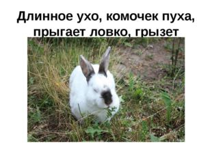 Длинное ухо, комочек пуха, прыгает ловко, грызет морковку.
