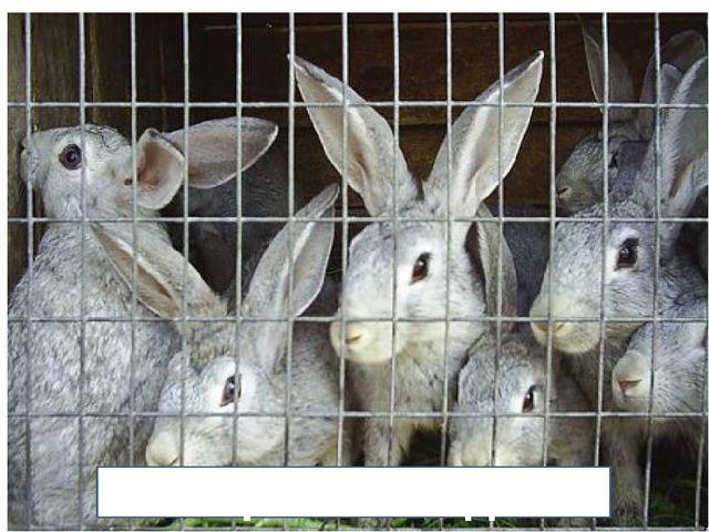 Кроликовод