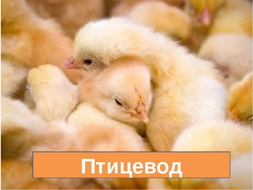 Птицевод