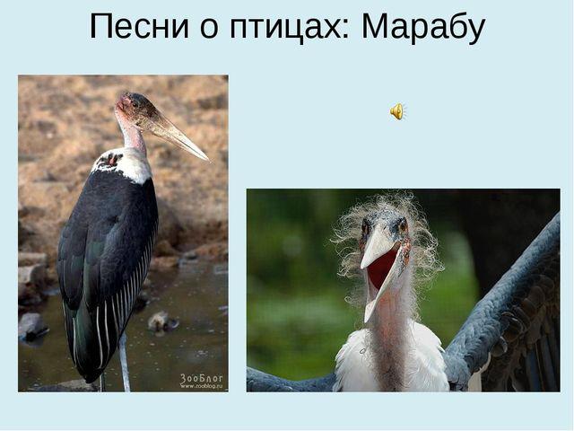 Песни о птицах: Марабу