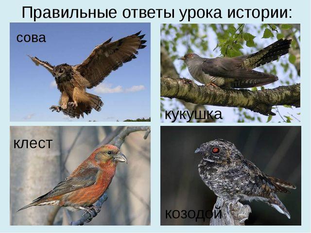 Правильные ответы урока истории: сова кукушка клест козодой