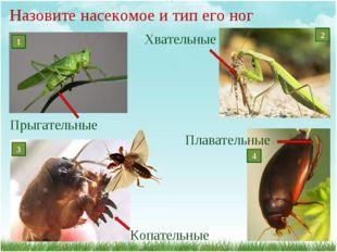 Назовите насекомое и тип его ног Плавательные Копательные Прыгательные Хвател