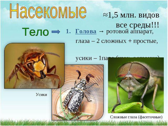 ≈1,5 млн. видов все среды!!! Голова → ротовой аппарат, глаза – 2 сложных + п...