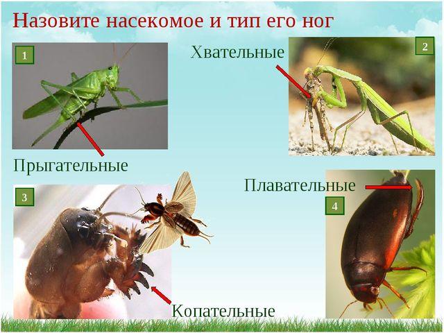 Назовите насекомое и тип его ног Плавательные Копательные Прыгательные Хвател...