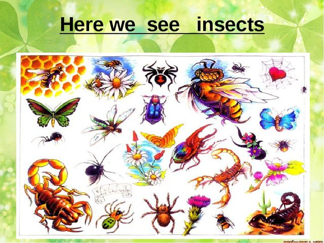 Here we see insects