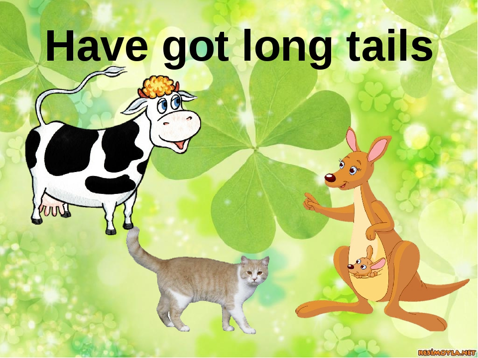 Have got long tails