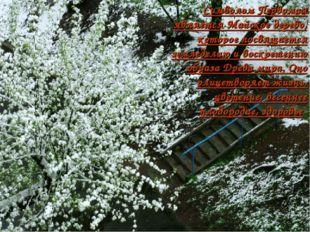 Символом Первомая является Майское дерево, которое посвящается земледелию ив