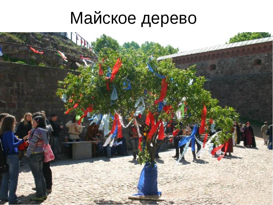 Майское дерево