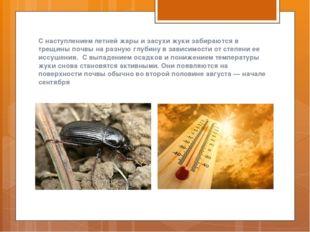 С наступлением летней жары и засухи жуки забираются в трещины почвы на разную