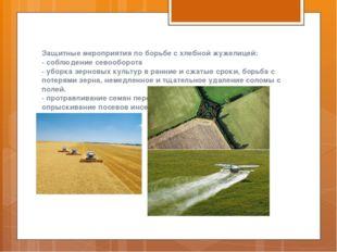 Защитные мероприятия по борьбе с хлебной жужелицей: - соблюдение севооборота