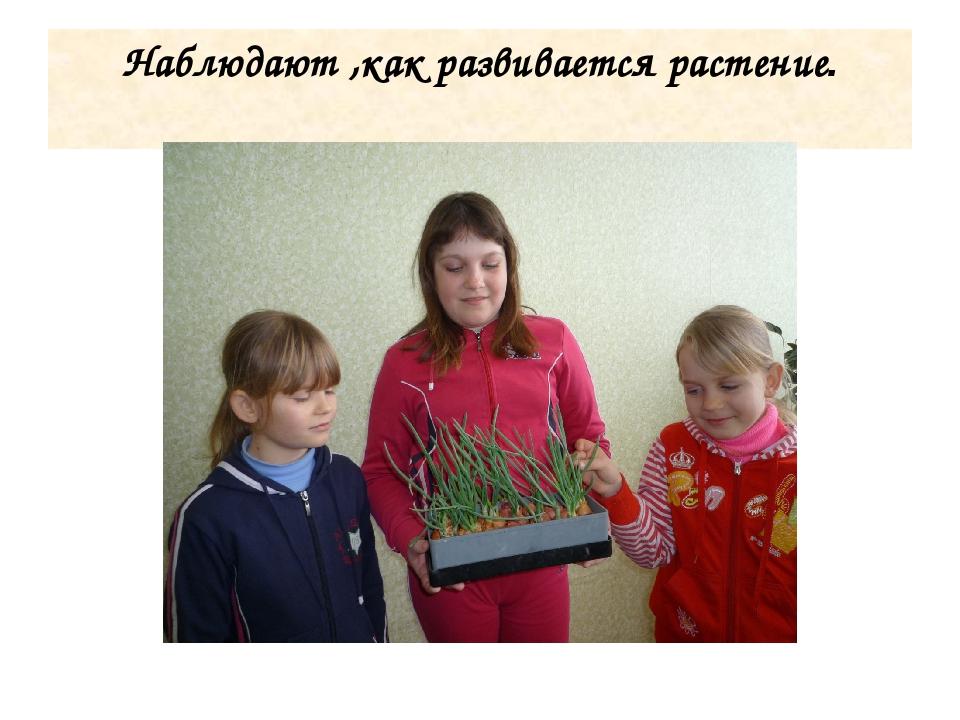Наблюдают ,как развивается растение.
