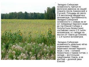 Западно-Сибирская низменность третья по величине равнина на нашей планете по
