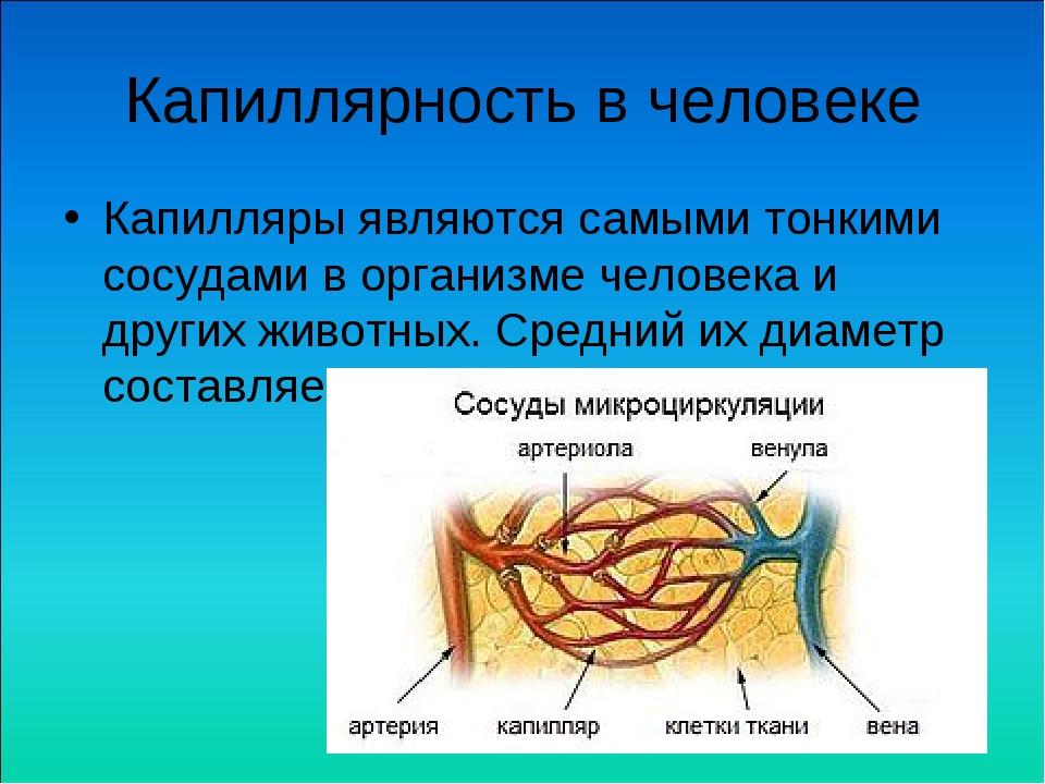 Капиллярность в человеке Капилляры являются самыми тонкими сосудами в организ...