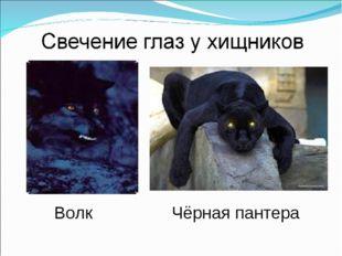 Волк Чёрная пантера