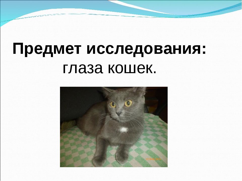 Предмет исследования: глаза кошек.
