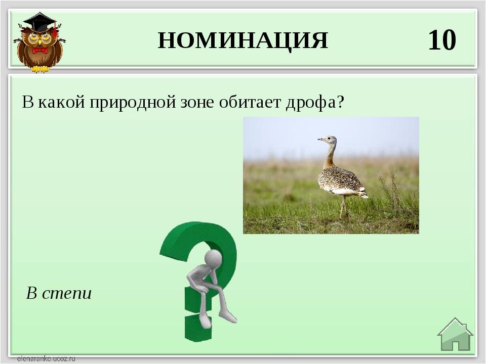 НОМИНАЦИЯ 10 В степи В какой природной зоне обитает дрофа?