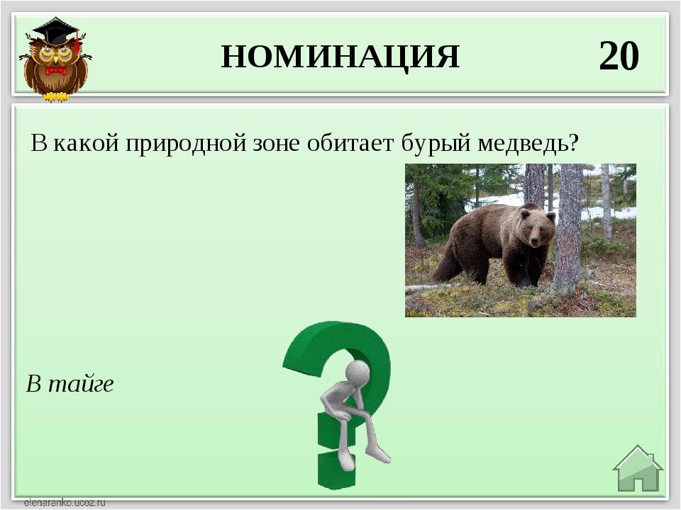 НОМИНАЦИЯ 20 В тайге В какой природной зоне обитает бурый медведь?