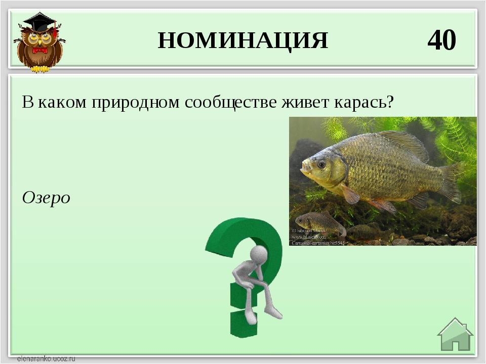 НОМИНАЦИЯ 40 Озеро В каком природном сообществе живет карась?