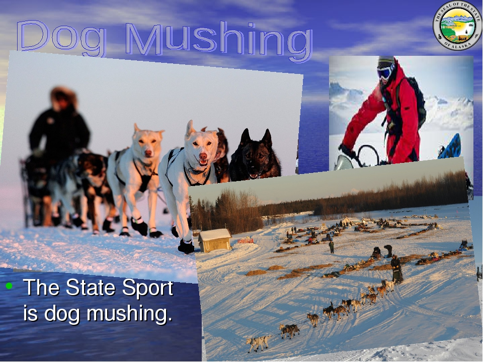 The State Sport is dog mushing.