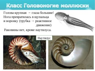 Голова крупная → глаза большие! Нога превратилась вщупальца иворонку (труб