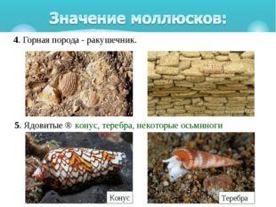4. Горная порода - ракушечник. 5. Ядовитые⇒конус, теребра, некоторые осьми