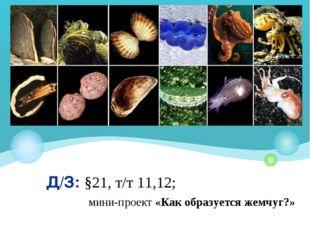 Д/З: §21, т/т 11,12; мини-проект «Как образуется жемчуг?»