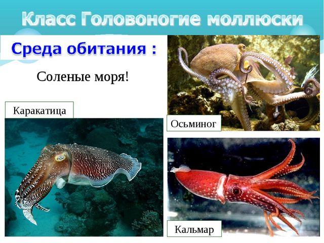 Соленые моря! Кальмар Осьминог Каракатица