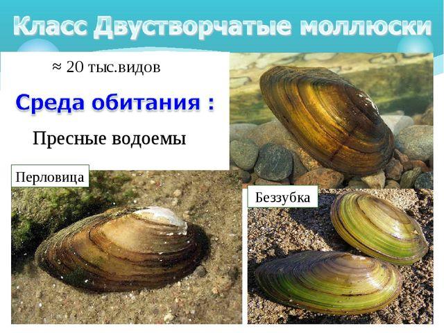 Пресные водоемы ≈20 тыс.видов Перловица Беззубка