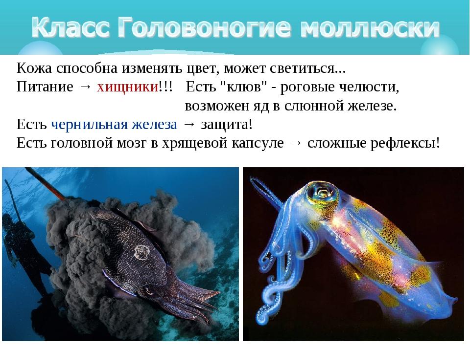 """Кожа способна изменять цвет, может светиться... Питание → хищники!!! Есть """"к..."""