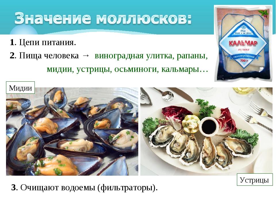 1. Цепи питания. 2. Пища человека→ виноградная улитка, рапаны, мидии, устр...