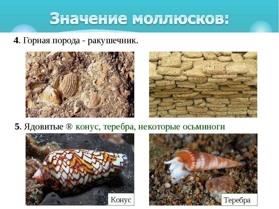 4. Горная порода - ракушечник. 5. Ядовитые⇒конус, теребра, некоторые осьми...