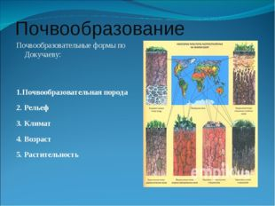 Почвообразование Почвообразовательные формы по Докучаеву: 1.Почвообразователь