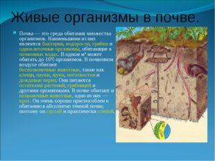 Живые организмы в почве. Почва — это среда обитания множества организмов. Наи