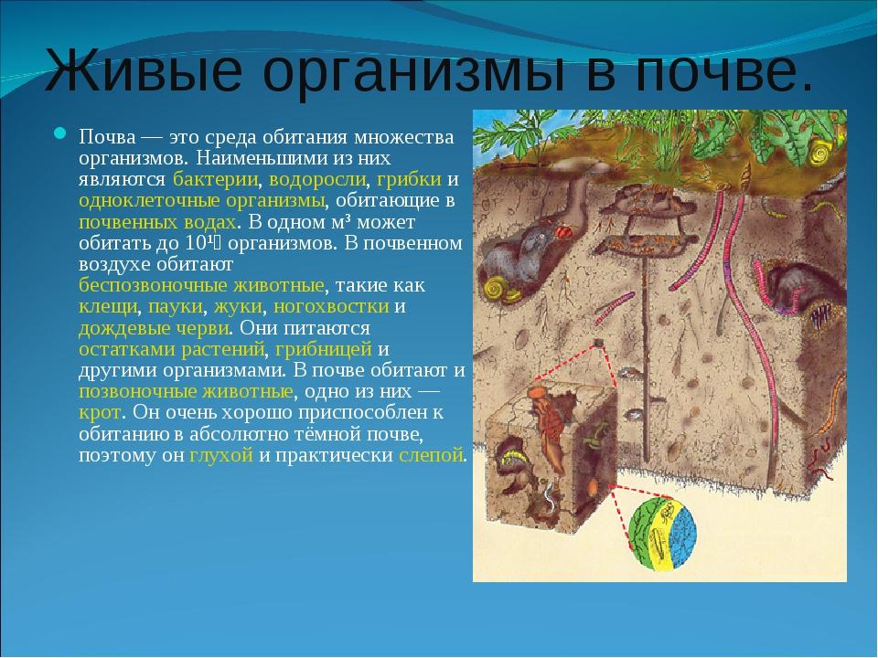 Живые организмы в почве. Почва — это среда обитания множества организмов. Наи...