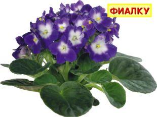 Просит у меня дружок Фиолетовый цветок. Мне отдать его не жалко, Подарю дружк