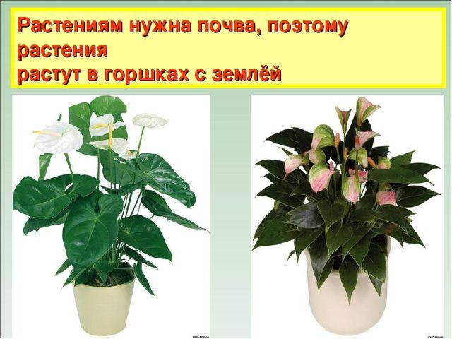 Растениям нужна почва, поэтому растения растут в горшках с землёй