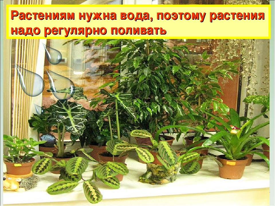 Растениям нужна вода, поэтому растения надо регулярно поливать