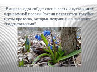 В апреле, едва сойдет снег, в лесах и кустарниках черноземной полосы России