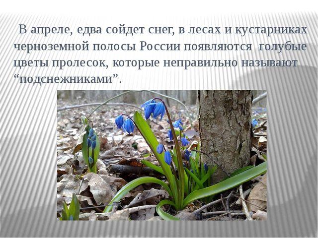 В апреле, едва сойдет снег, в лесах и кустарниках черноземной полосы России...