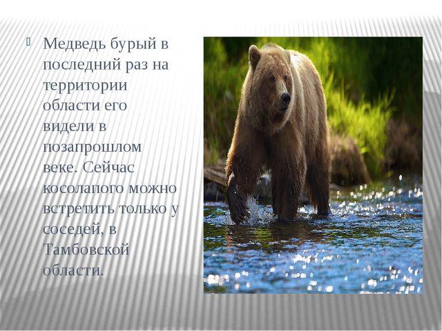 Медведь бурыйв последний раз на территории области его видели в позапрошлом...