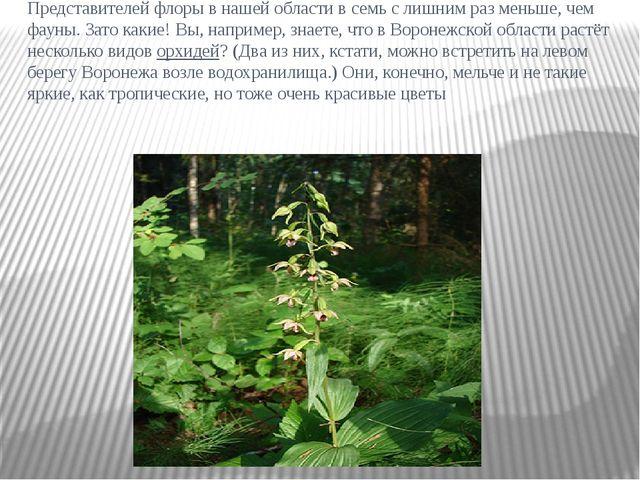 Представителей флоры в нашей области в семь с лишним раз меньше, чем фауны. З...