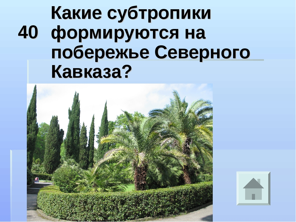 40 Какие субтропики формируются на побережье Северного Кавказа?
