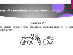 Тема «Разнообразие животного мира» Карточка2** Что общего между этими объект