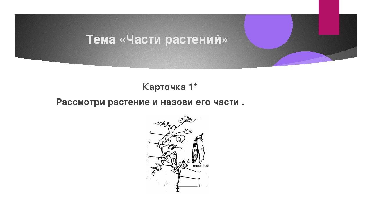 Тема «Части растений» Карточка1* Рассмотри растение и назови его части .
