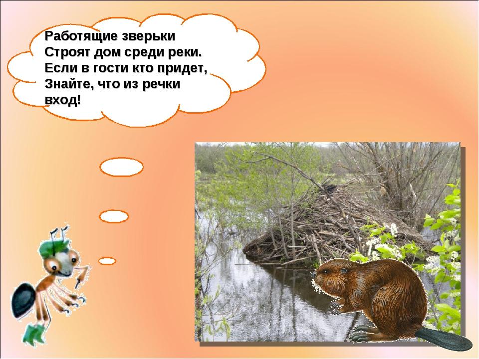 Работящие зверьки Строят дом среди реки. Если вгости кто придет, Знайте, что...