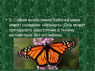 5. Самая выносливая бабочка мира имеет название «Монарх». Она может преодолет