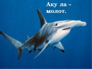 Опасные 1.Белая акула. 2.Тигровая акула. 3.Рыба – молот и др. Белая аку́ла Ти