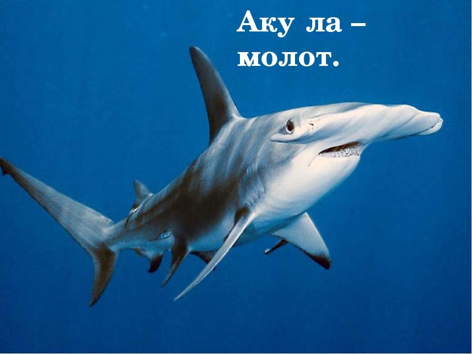 Опасные 1.Белая акула. 2.Тигровая акула. 3.Рыба – молот и др. Белая аку́ла Ти...