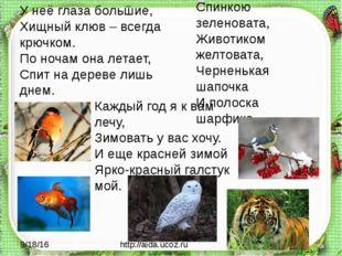 http://aida.ucoz.ru Спинкою зеленовата, Животиком желтовата, Черненькая шапо