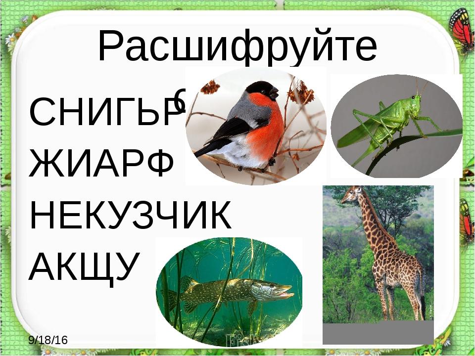 Расшифруйте слова: СНИГЬРЕ ЖИАРФ НЕКУЗЧИК АКЩУ http://aida.ucoz.ru